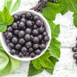 Ribes nero - Black Currant Flavor -Aroma concentrato 15ML -PERFUMER'S APPRENTICE