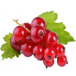 Aroma Ribes  Flavourart