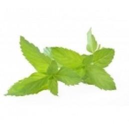 Aroma Mild Winter (Menta Piperita) Flavourart
